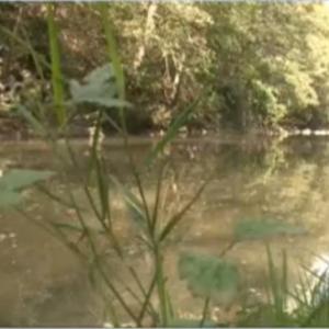 Жители на Златарица излязоха на протест заради замърсяване на реката