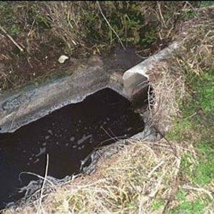 Мъртва риба изплува в река Камчия