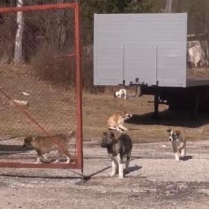 Община Смолян поддържа два нерегламентирани кучешки приюта