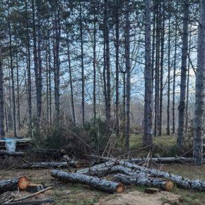 """РИОСВ: Изсичането на дървета в къмпинг """"Градина"""" е незаконно (видео)"""