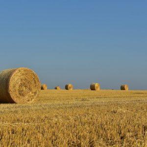 Общински съвет – Тервел ще гласува отсрочване плащането на наеми за земеделски земи